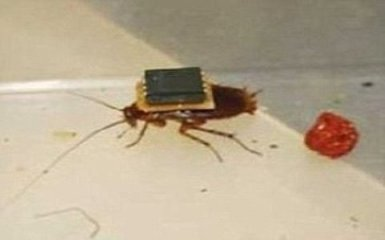 TechWire_Cockroach.jpg